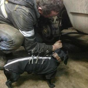 tool-dog-dachshund-suit-auto-mechanic-20