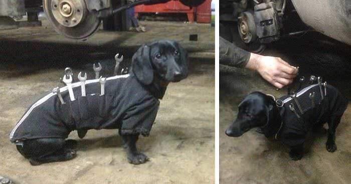 tool-dog-dachshund-suit-auto-mechanic-fb1__700-png