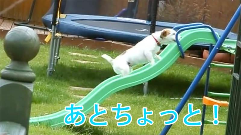あとちょっとで登れそうなんだけど登れない犬