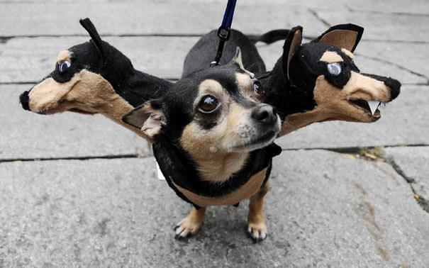 ハロウィン級の動物たちのコスプレ写真!