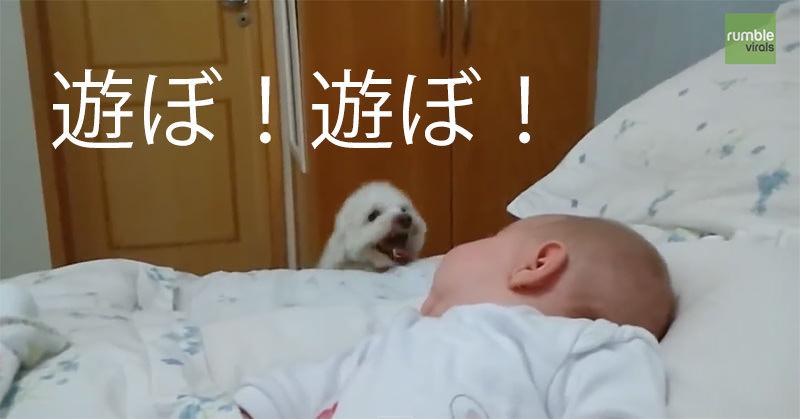 赤ちゃんに猛烈アピールをする子犬!
