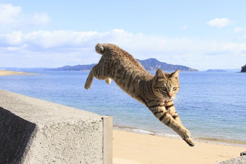 猫好き必見!?猫がジャンプしているシーンをパシャリな写真集『飛び猫』