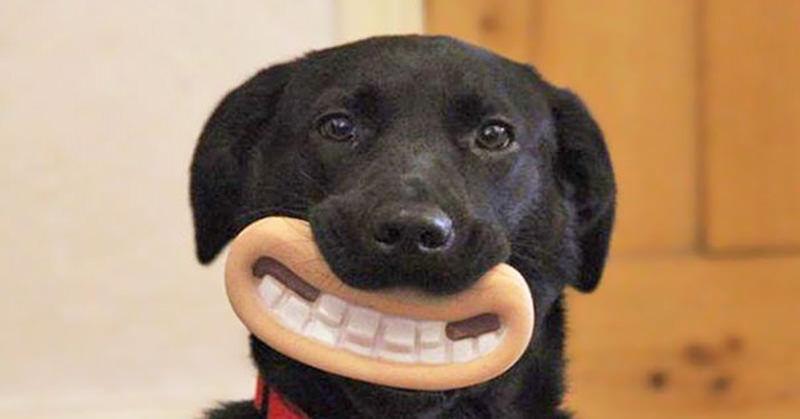 犬にくわえさせると面白いグッズが有るんです