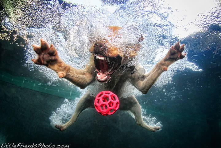 犬とプールを組み合わせたらすごいのが撮れる!