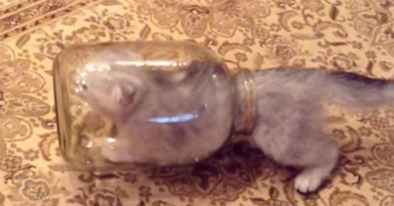 空きビンの中にすっぽりと入った小ネコが脱出する様子