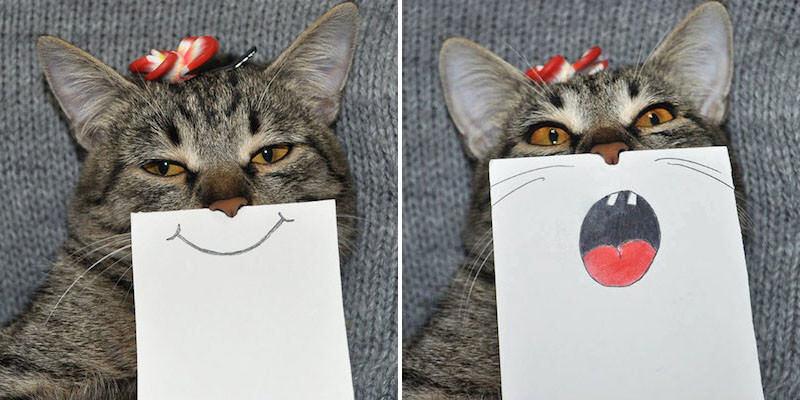 猫が不機嫌?だったら紙とペンを用意しましょう