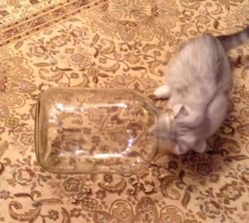 kittycat2