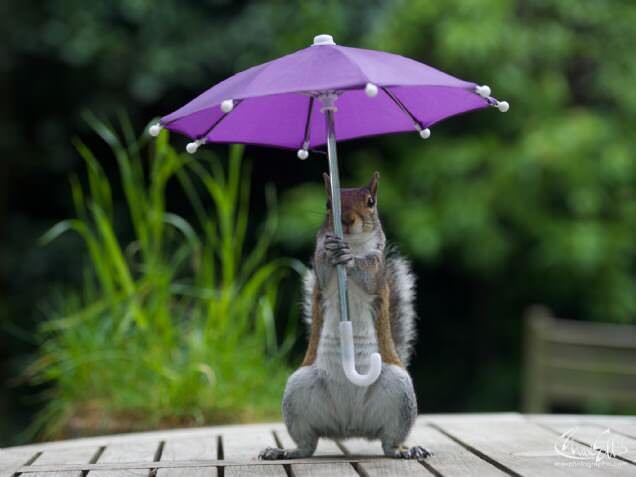 リスが小さな傘を持って雨をしのぐ写真が素敵