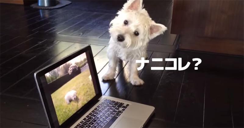 画面の中の子犬を探そうとするワンちゃんが可愛い!
