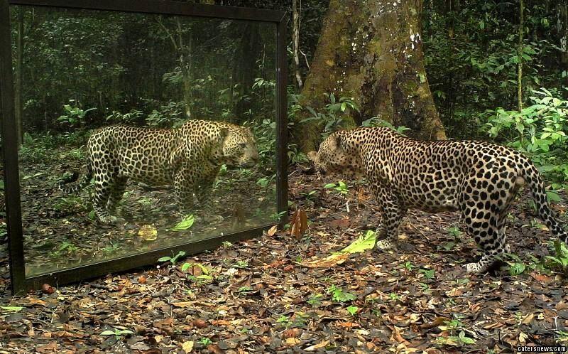 森林のなかに大きな鏡を置いたら動物達が寄ってきた!