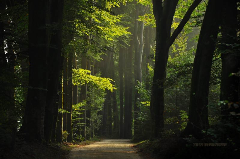green_days_by_nelleke_d86cwwo-135-800-800-100