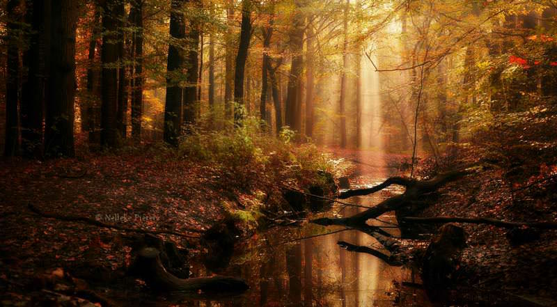 the_charm_by_nelleke_pieters-110-800-800-100