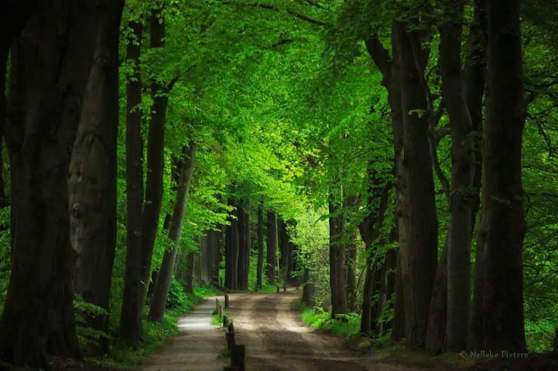 オランダ人フォトグラファーNelleke Pietersに撮影された美しい森の写真