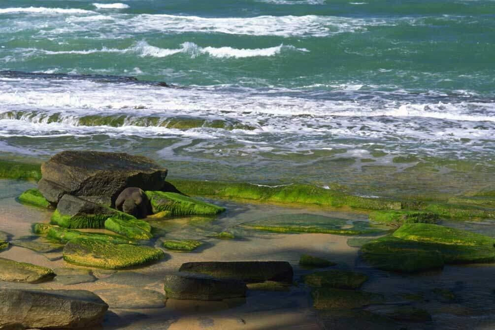 Emerald-Shores-1
