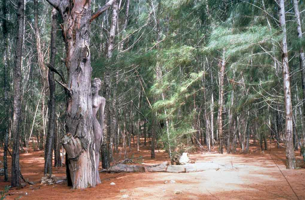 Enchanted-Forest1