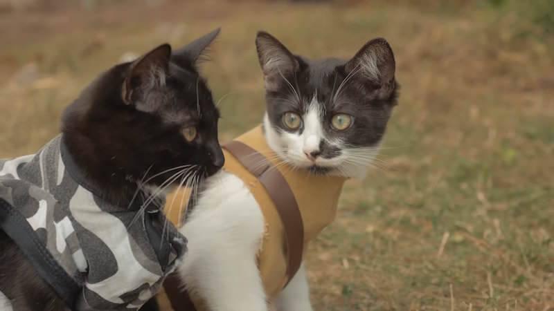 ゾンビ共に立ち向かう二匹のネコさん!Cats vs Zombies
