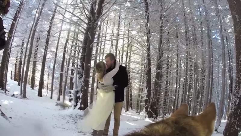 雪の結婚式を犬視線で見るとなんとも素敵