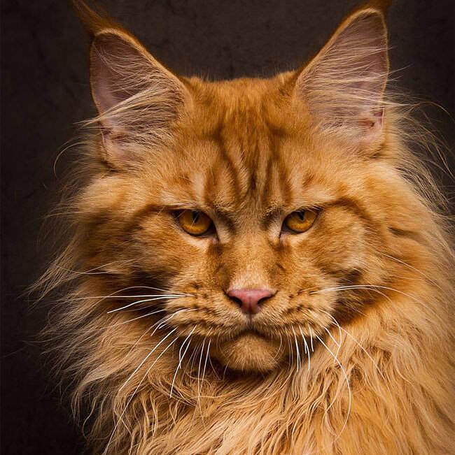 凛々しすぎる猫さんの写真:Robert Sijka