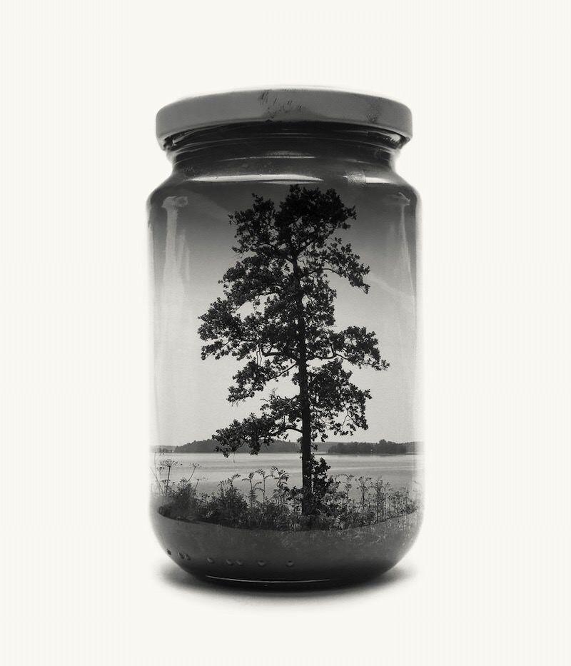 Jarred tree 800x933