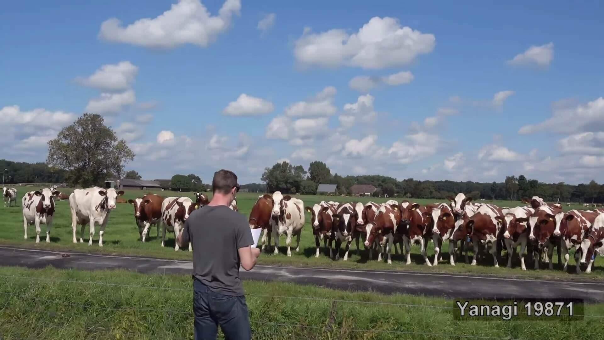 最強のゲップ師、ゲップのパワーのみで牛を呼び寄せる妙技を披露