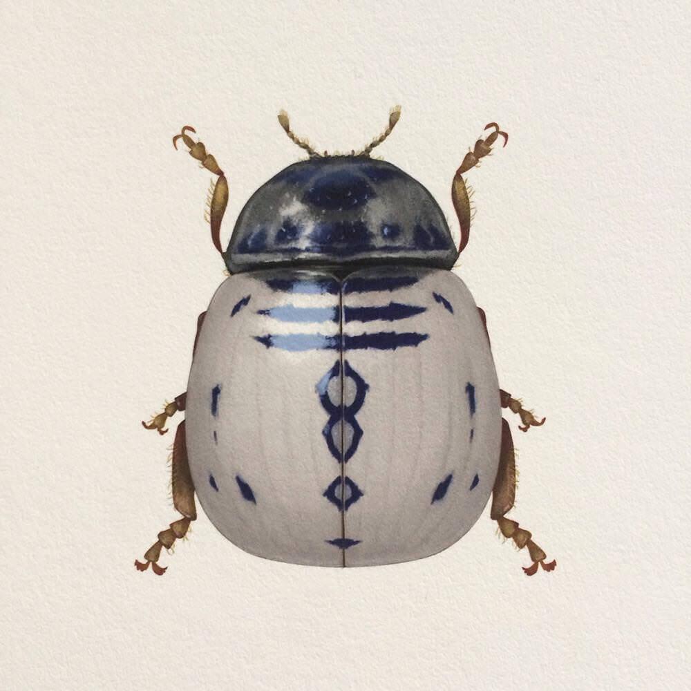 マジでソレっぽい スター ウォーズな虫たちのイラスト Richard Wilkinson
